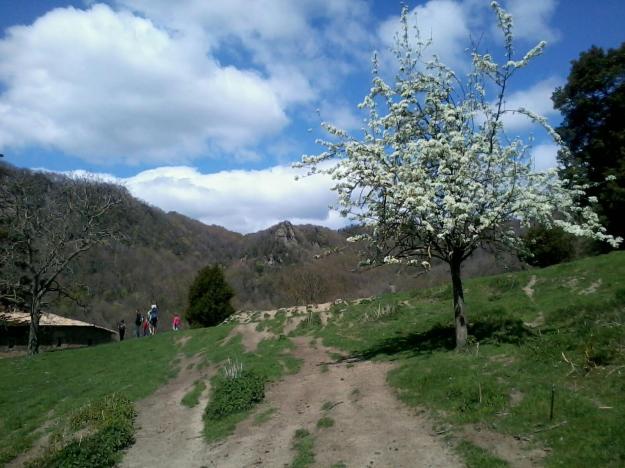 Primavera a Collsacabra